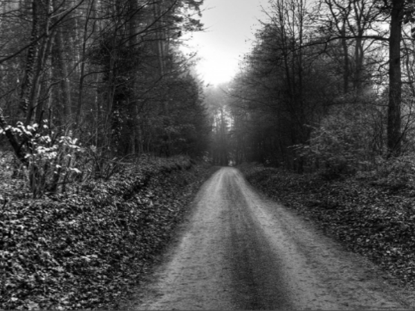 haunted-forest-scary-road-hq.jpg
